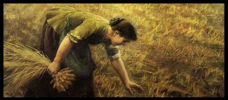 Banner image for the Book of Ruth series, with Ruth working int he fields.