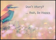 "Image of a colorful bird in a field of flowers for the message, ""Don't Worry? ...Yeah, Be Happy""."