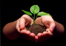 Kingdo Principles Image hands-and-plant.jpg